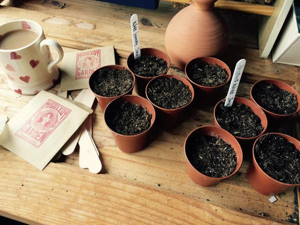 @bessybrad sowing biennials in pots...great idea to get this done before the end of July. Go to the top of the class Bessy. :)