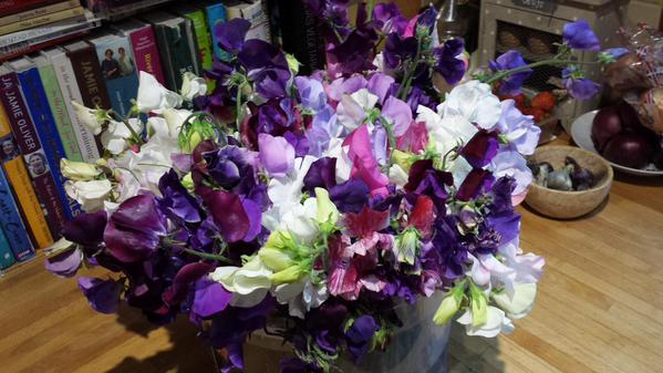 More Sweet Pea action from the rabble at Glebe Field Allotments.