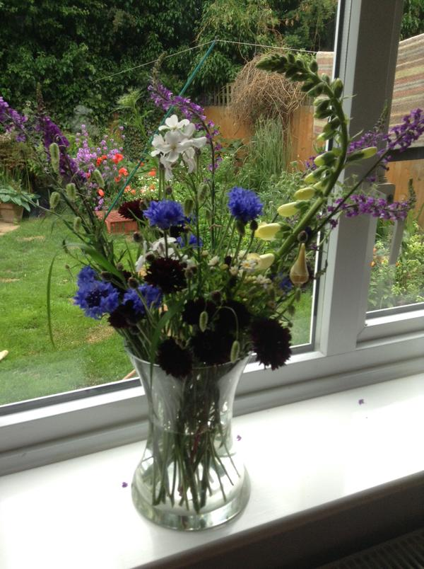 Thanks to J Williams (Twitter). The first Cornflowers of the season are always the best.