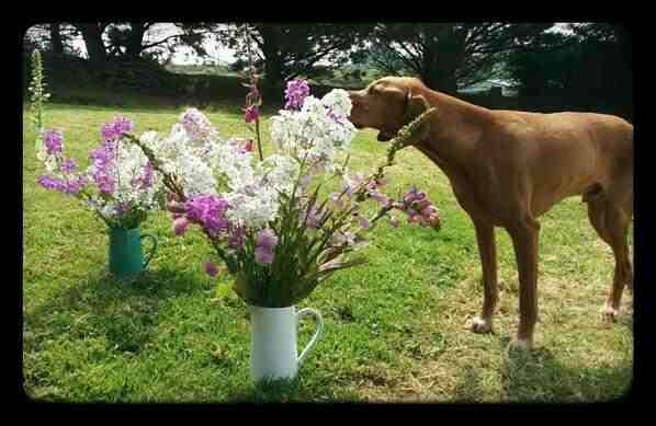 Furface has got a soft spot for Hesperis.