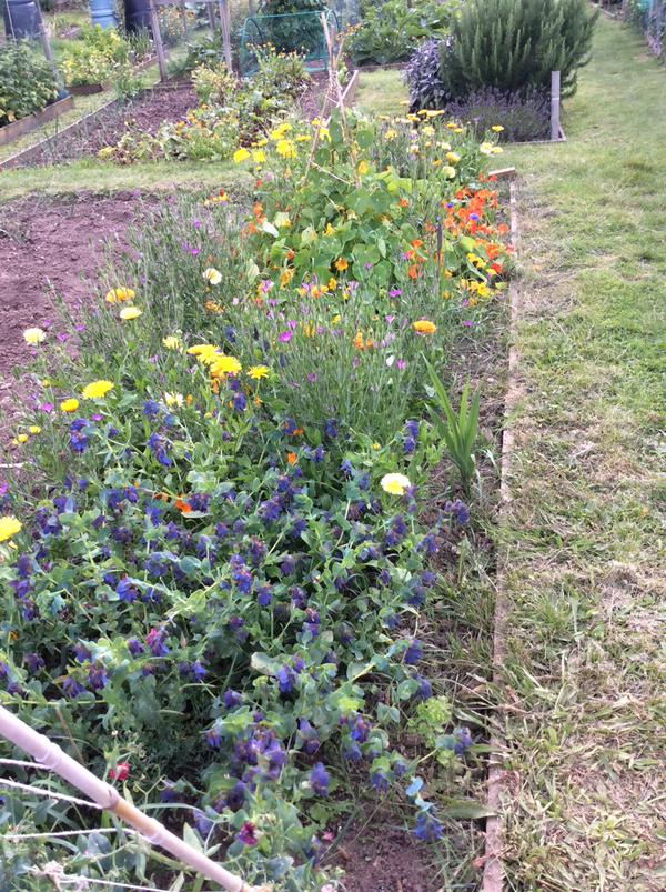 ...and finally one from the lovely Ronnie Tyler....this is her daughter's lotty flower patch...lots going on in there....Cerinthe in foreground looking rumbustious.