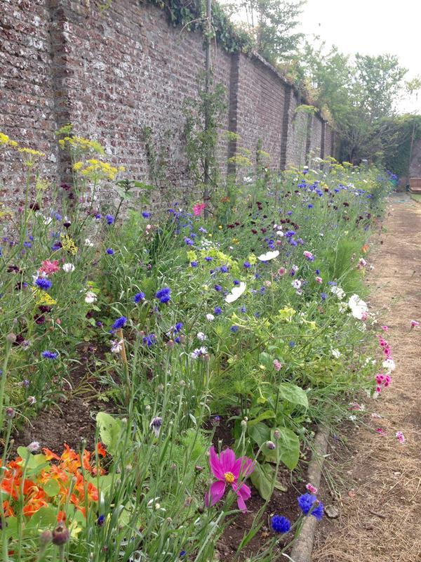 I was lucky enough to meet @jillAGardens at Port Eliot....this is a pic she took of one of my beds there....the beds weren't quite up to the glory of last year... #MustTryHarder