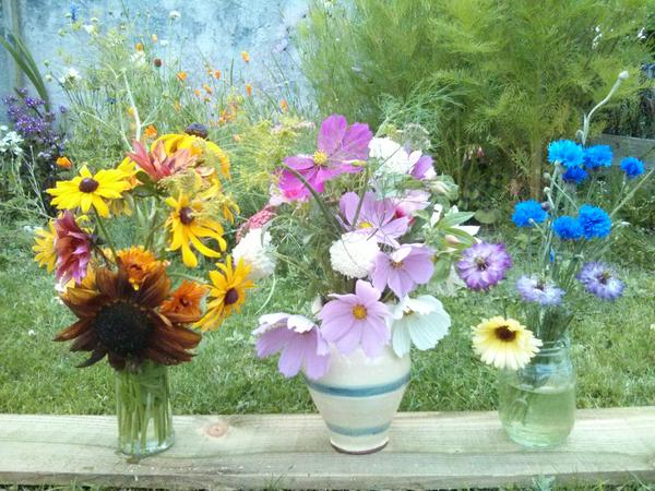 Nick Hearle has been harvesting.....good stash there Nick....those Earthwalker sunflowers look very healthy...and go swimmingly well with the Rudbeckia 'Marmalade'.