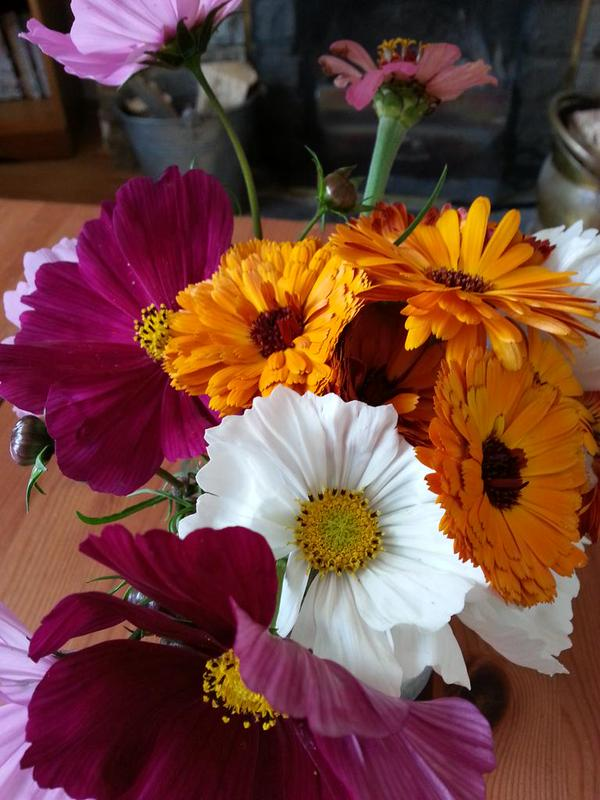 Simple things...Cosmos & Calendula...fab little posy from @MichelleHole1