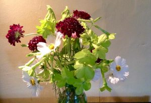 Thx to @LucieHyndley for this double ace pic of Scabiosa Back in Black...with some mighty fine Nicotiana Lime Green