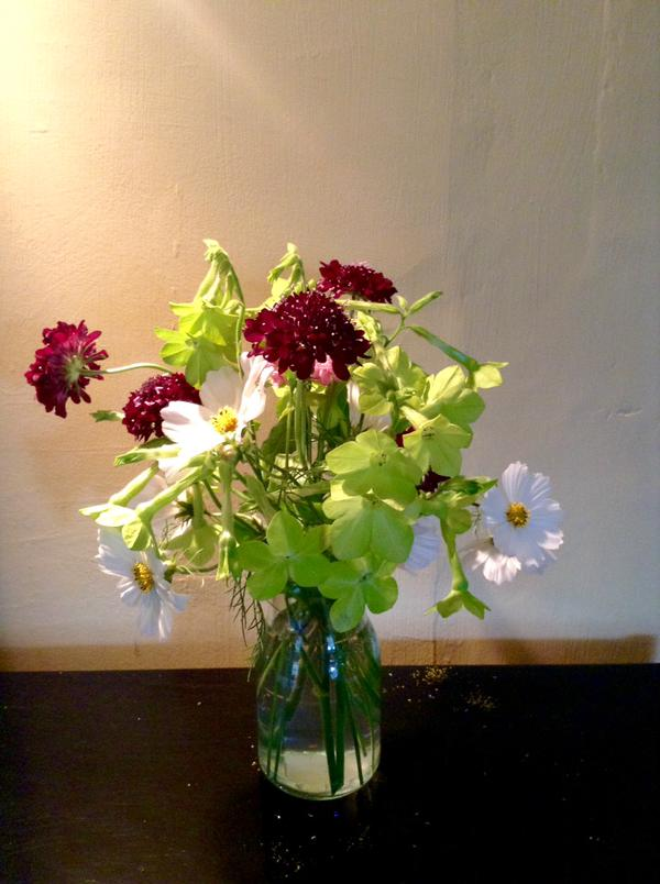 Thx to @LucieHyndley for this double ace pic of Scabiosa 'Back in Black'...with some mighty fine Nicotiana 'Lime Green' & Cosmos Purity. #Classy