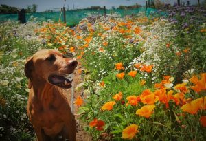 Furface in the lotty plot.