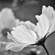'Purity'...another arty shot...this time by yours truly.