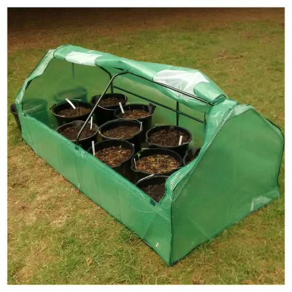 This little seedling tunnel was £30...very handy.