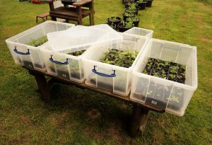 storage box greenhouse