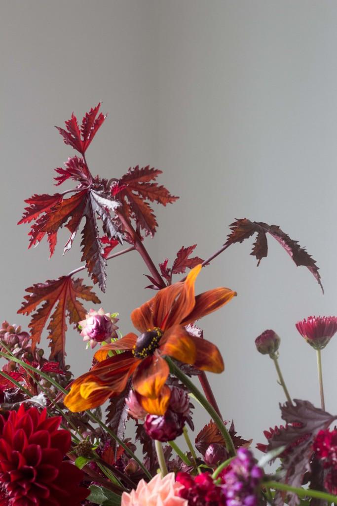 Hibiscus 'Mahogany Splendor' copyright Ian Curley