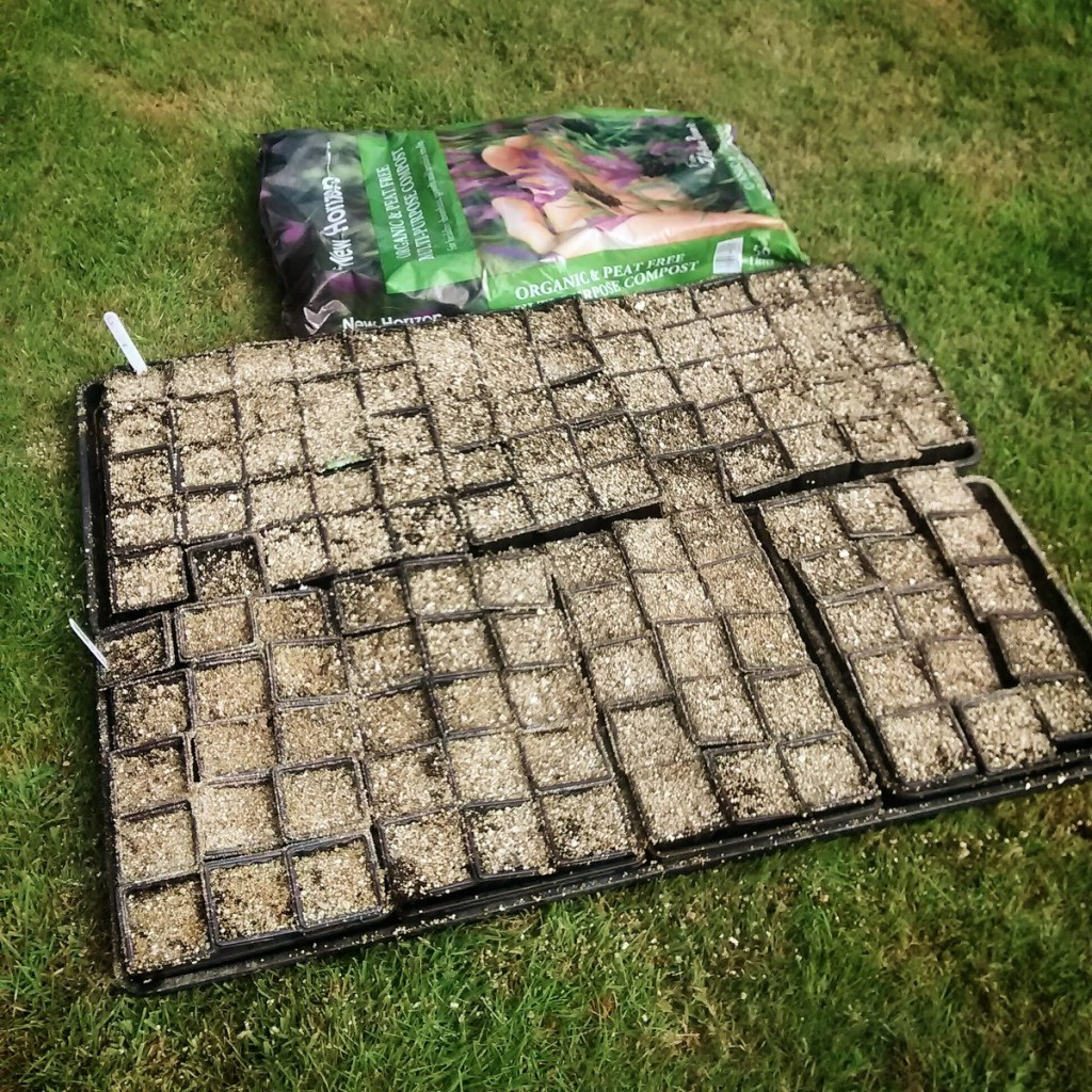 Biennials sown in New Horizon Peat Free Compost.