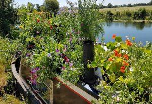 Boat Garden. July. #boatymcboatgarden
