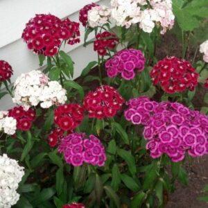 higgledy garden
