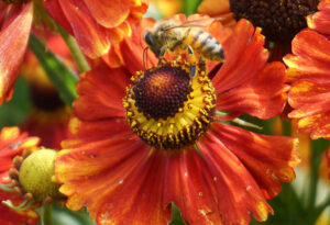 Ask not just what your bees do for you…but what you can do for your bees!